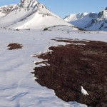 Spring Ptarmigans, Chugach Mountains, Alaska