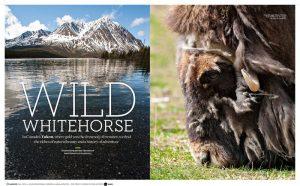 Holland American Mariner Magazine Yukon article