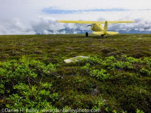 Cessna 120 bush plane on the Alaska tundra. Summer