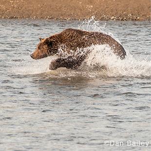 Bear-sidebar-photo