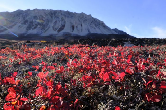 The Symphony of Autumn | Dan Bailey's Adventure Photography Blog