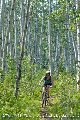 Mountain biking through aspens