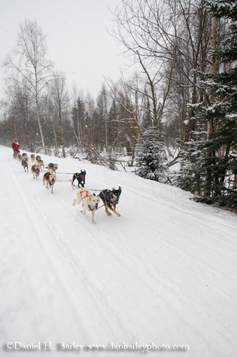 Dog Mushing, Anchorage, Alaska
