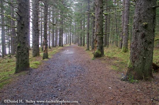 Forest path- Kodiak, Alaska
