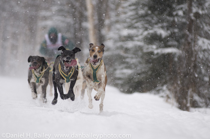 Fur Rondy dog sledding race. World sprint championships, Anchorage, Alaska