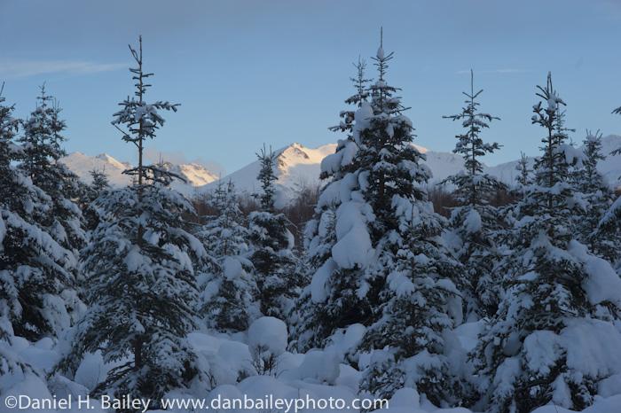 Winter landscape- Far North Bicentennial Park, Anchroage, Alaska