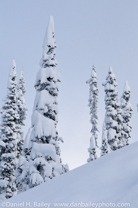 Snowy forest landscape and winter pine trees, British Columbia, Selkirk Mountains, Canada.