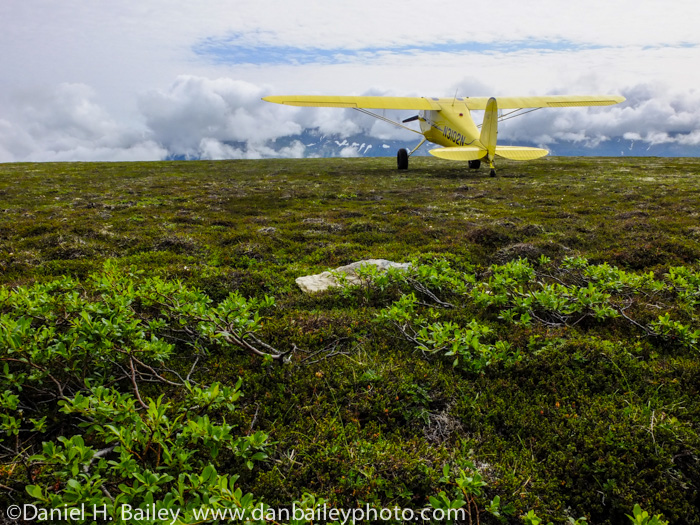 Cessna 120 bush plane on the Alaska tundra. Summer